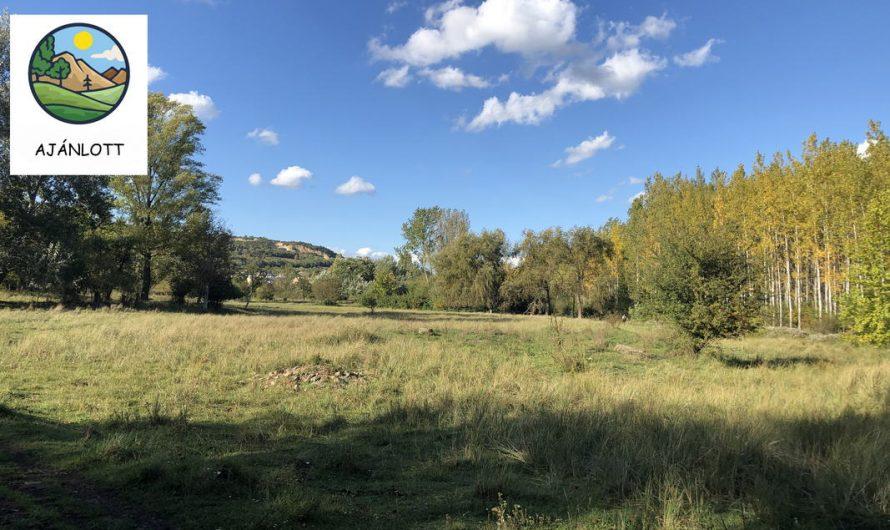 Keddi Kutyagoló 20km teljesítménytúra – Könnyű séta egy kellemes őszi napon a Róka-hegyi kőfejtő körül